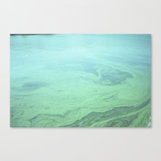 Algae  Canvas Print