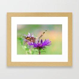 Butterfy 38 Framed Art Print