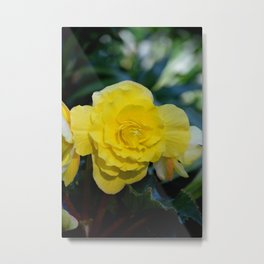 Yellow Begonia Metal Print