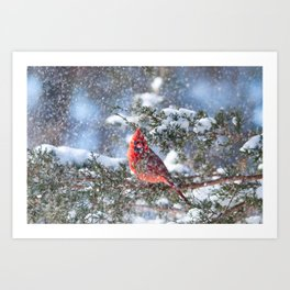 Let It Snow (Northern Cardinal) Art Print