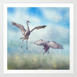 Pair of Sandhill Cranes  dance in the Florida wetlands Art Print