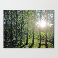 Early Autumn Sun Canvas Print