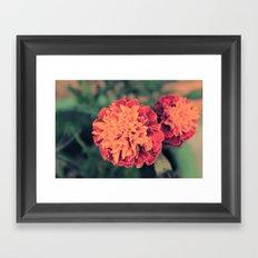 Marigold Framed Art Print