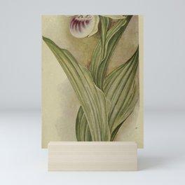 Vintage Botanical Print - Showy Lady's Slipper Orchid Mini Art Print