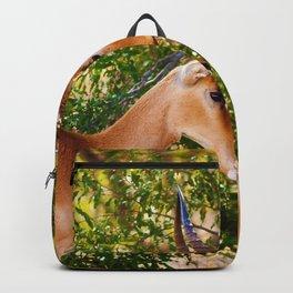 Gazelle (Color) Backpack