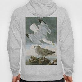 Seagulls Illustration - Birds in America Hoody