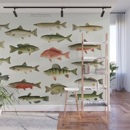 Illustrated North America Game Fish Identification Chart Wall Mural