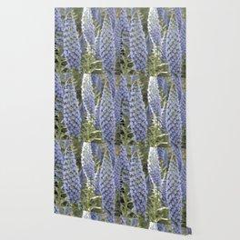 Longwood Gardens Orchid Extravaganza 51 Wallpaper