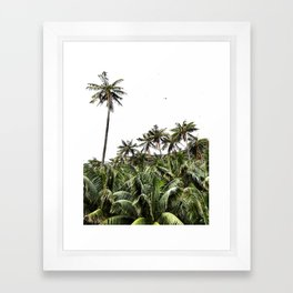 Palm Trees of Lord Howe Island Framed Art Print