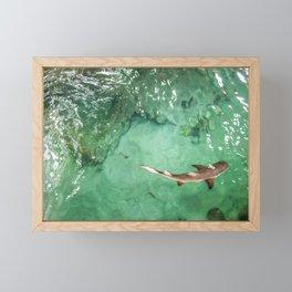 Look at the Shark Framed Mini Art Print