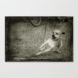 Dog play Canvas Print