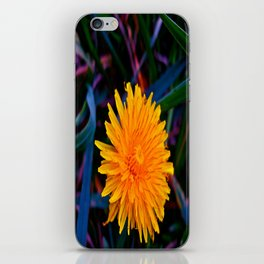 Dandelion of All Colors iPhone Skin