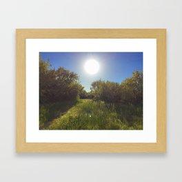 Sunshine on the path Framed Art Print