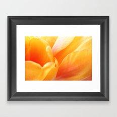 Sunny Yellow Tulip Petals Framed Art Print