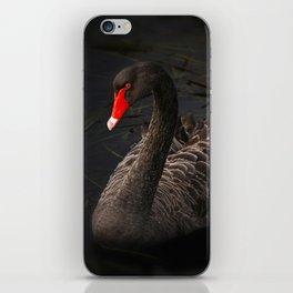Beautiful Black Swan with a Bright Red Beak iPhone Skin