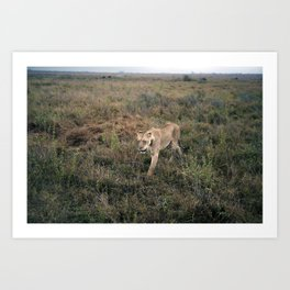 Lone Lion. Art Print