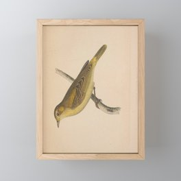 Vintage Print - A History of the Birds of Europe (1859) - Viellot's Yellow Warbler Framed Mini Art Print