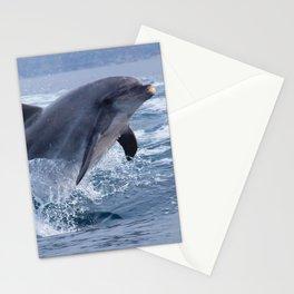 Bottenose dolphin Stationery Cards