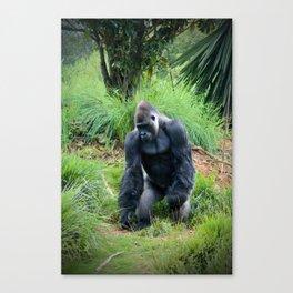 Standing Gorilla Canvas Print