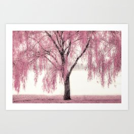 Pink Willow Art Print
