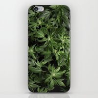 weed iPhone & iPod Skins featuring Weed by Vyacheslav Sizov