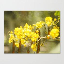 Popcorn Flower Bokeh Delight Variation Canvas Print