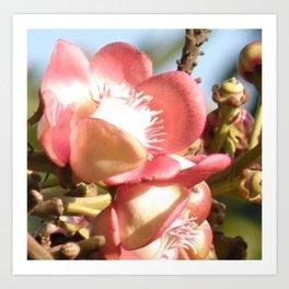 Illustration,  photo, nature, flowers Art Print