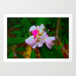 soft is the petals  Art Print