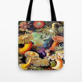 Under the Sea : Sea Anemones (Actiniae) by Ernst Haeckel Tote Bag