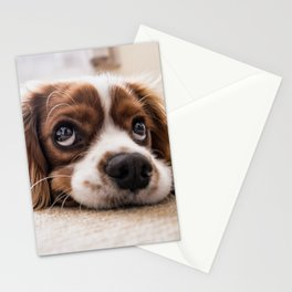 Cute dog with Big Innocent Eyes Stationery Cards