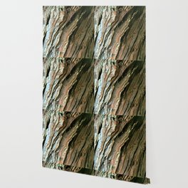 Old Olive tree weathered wood Wallpaper