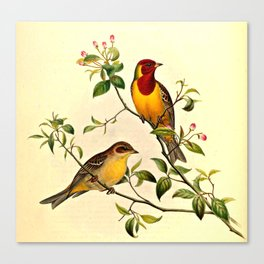Red-Headed Bunting Canvas Print