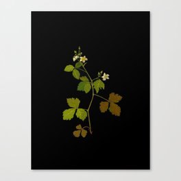 Rubus Saxatilis Mary Delany Vintage Botanical Paper Flower Collage Canvas Print