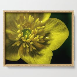 Buttercup Flower Close up Serving Tray