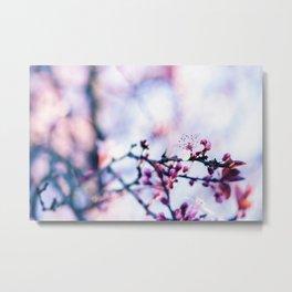 Hill Cherry Flower - Yamazakura Sakura Metal Print
