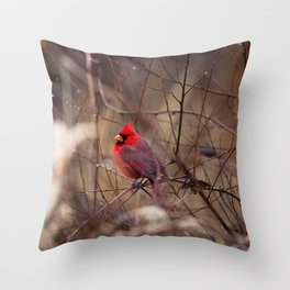 Cardinal - Bright Red Male Bird Rests in Raindrops Throw Pillow