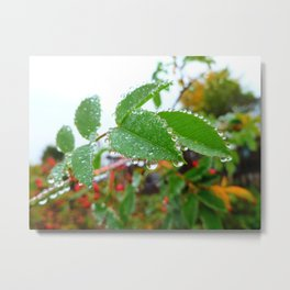 Nature's Beads of Beauty Metal Print