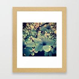 Magnolias flowering Framed Art Print