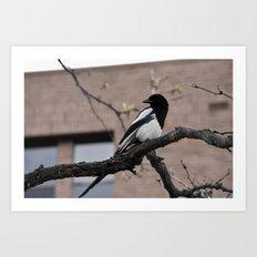 ...some...bird Art Print