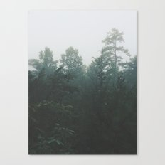 Pine Trees through the Mist Canvas Print