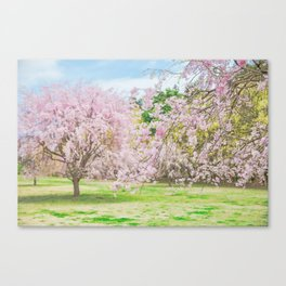 cherry blossoms blooming in a fantastic garden Canvas Print