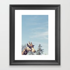 giraffe... Framed Art Print