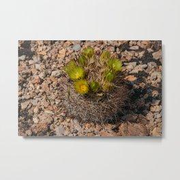 Desert Cacti in Bloom - 5 Metal Print