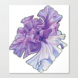 Lace Iris Canvas Print