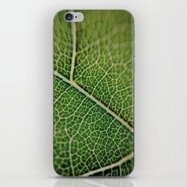 Veins of a leaf iPhone Skin
