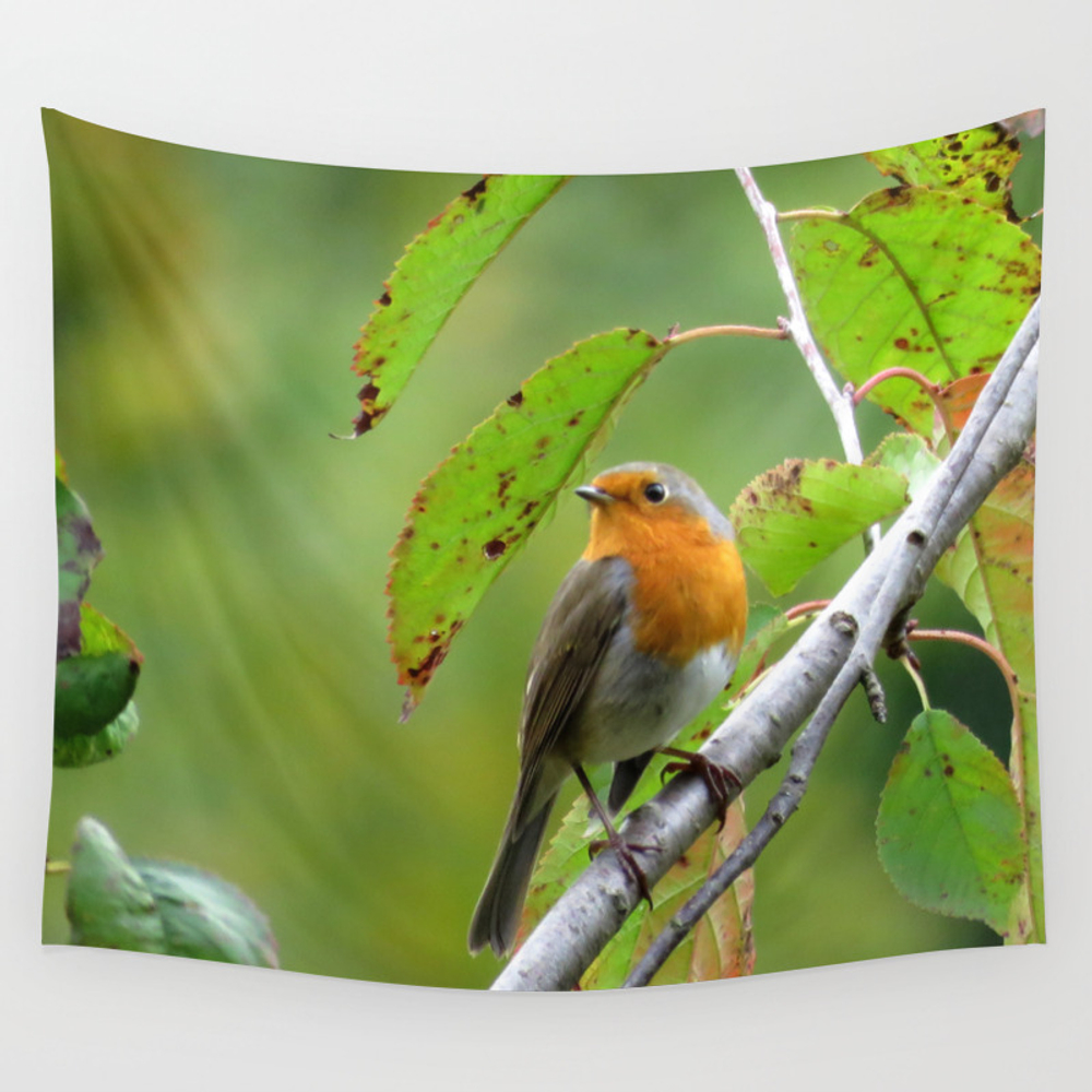 Mm - Robin Redbreast Wall Tapestry by Pirminnohr (TPS3910152) photo