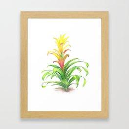 Bromeliad - Tropical plant Framed Art Print