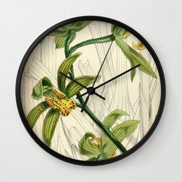 Cymbidium iridioides Wall Clock
