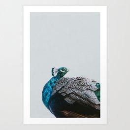 Mr. Peacock Art Print
