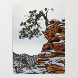 RED SANDSTONE AN TREE IN SNOW Poster